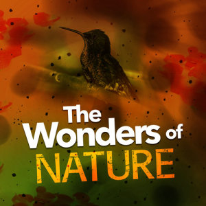 Album The Wonders of Nature from Outside Broadcast Recordings