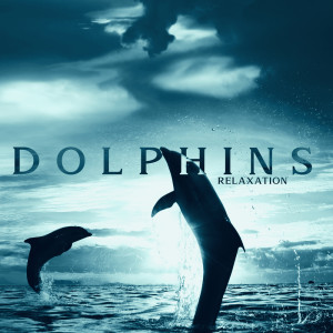 Album Dolphins Relaxation - Healing Water for Deep Meditation and  Peace from Calming Water Consort