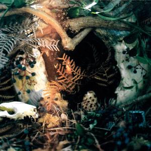 Album Neocambrian from Salamander