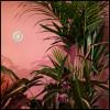 Download Lagu Beaty Heart - Opal Loop