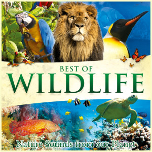 Global Journey的專輯Best of Wildlife - Nature Sounds from Our Planet
