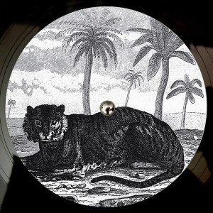 Album Try The Impossible from Tigerskin