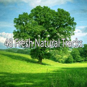 Album 48 Fresh Natural Tracks from Meditation Zen Master