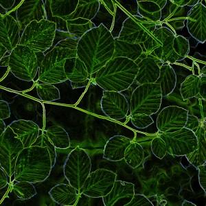 Ella Fitzgerald & The Ink Spots的專輯Green Wood