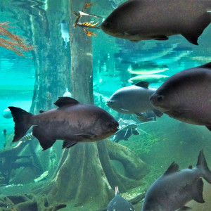 Acerting Art的專輯Deep Underwater Sounds from Exotic Amazonian Flooded Forest