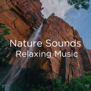 "Nature Sounds Nature Music的專輯!!"" Nature Sounds Relaxing Music ""!!"