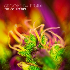 Album The Collective from Groove Da Praia
