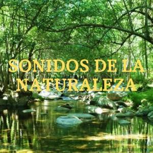 Sonidos De La Naturaleza ! Musica Relajante ! Musica De Reflexion