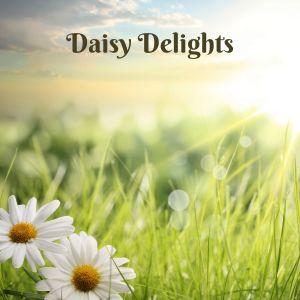 Easy Sleep Music的專輯Daisy Delights