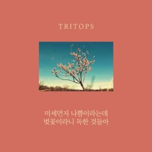 Tritops的專輯미세먼지 나쁨이라는데 벚꽃이라니 독한것들아