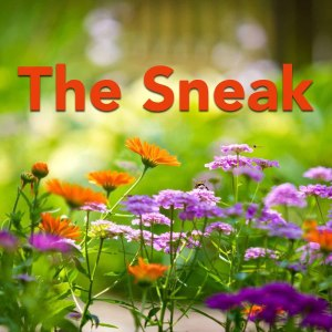 Album The Sneak from Various Artists