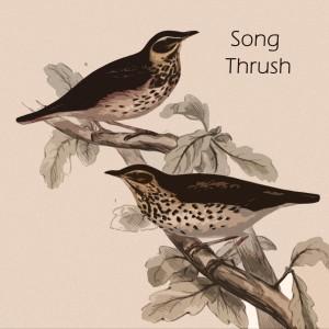 Stan Getz的專輯Song Thrush