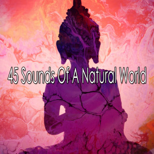 Album 45 Sounds of a Natural World from Massage Therapy Music