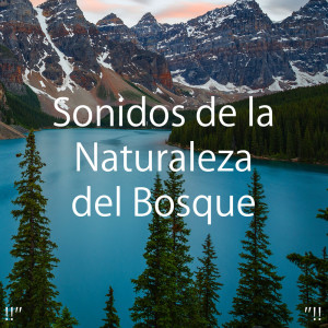 "Nature Sounds Nature Music的專輯!!"" Sonidos de la Naturaleza del Bosque ""!!"