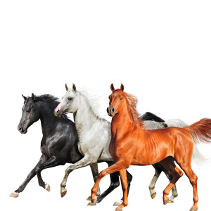Album Old Town Road (Diplo Remix) from Lil Nas X