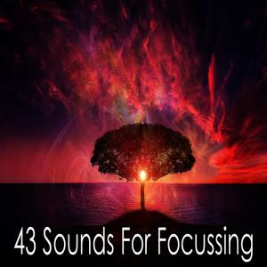 Album 43 Sounds for Focussing from Meditacion Música Ambiente